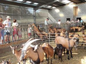 visite de la ferme du puy de l`Aiguille